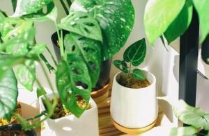 En recherche d'un talent instrumental sensible pour encore mieux chanter les plantes